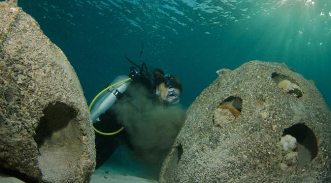 Marine Biology Case Study Dental Vantage Dinh Vo Dds